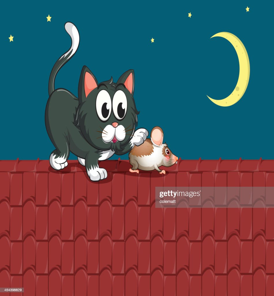 Cat and a mouse at the rooftop