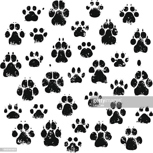 cat and dog paw prints - dog stock illustrations