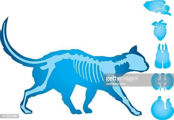 cat body vector