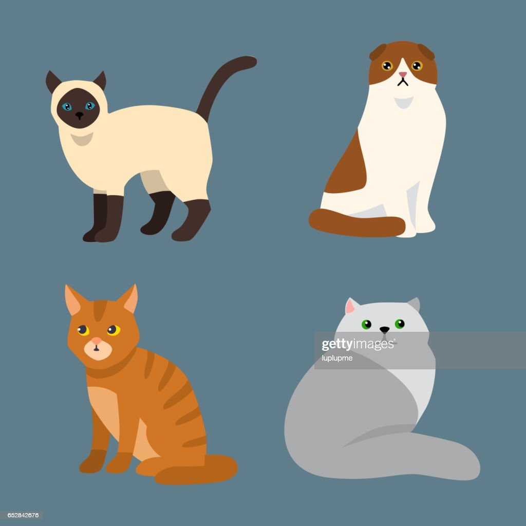 Cat breed cute pet portrait fluffy young adorable cartoon animal and pretty fun play feline sitting mammal domestic kitty vector illustration