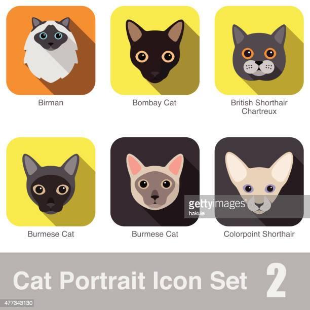 cat breed face cartoon flat icon series - purebred cat stock illustrations