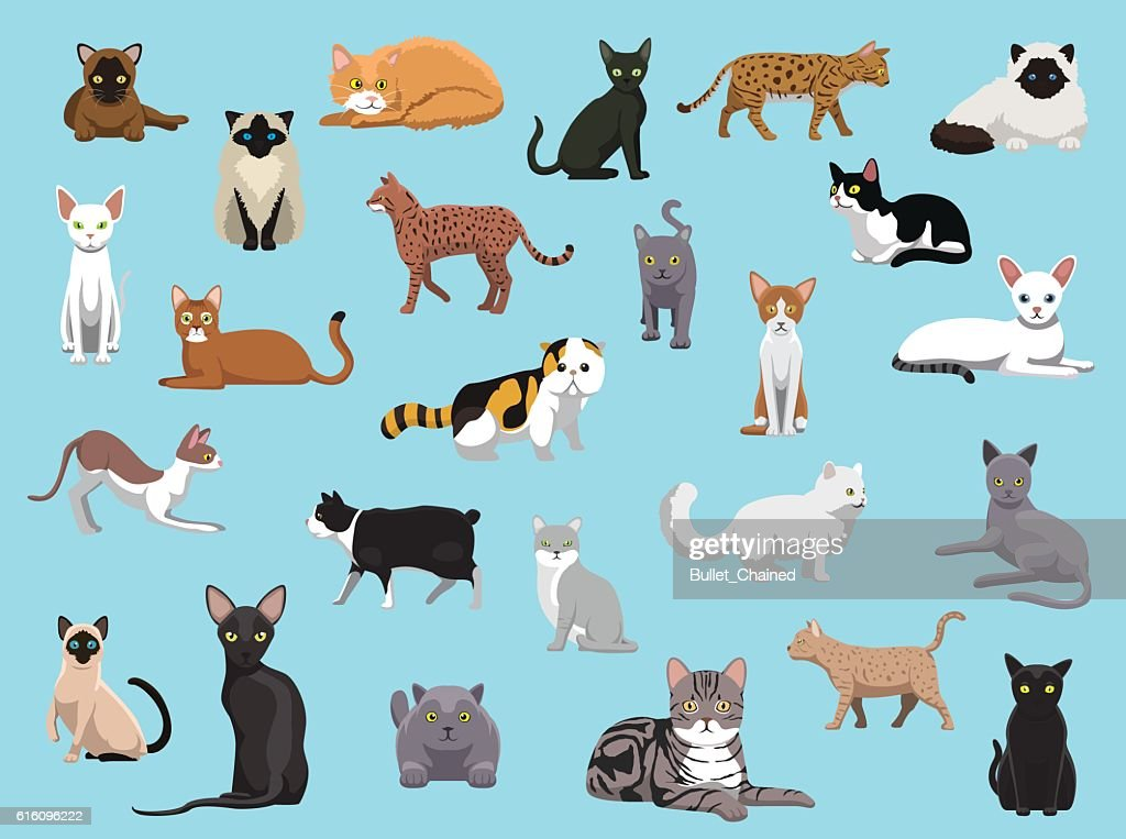 25 Cat Breeds Cartoon Vector Illustration