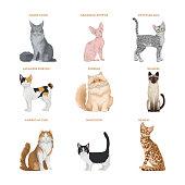 Cat breeds set on white background.