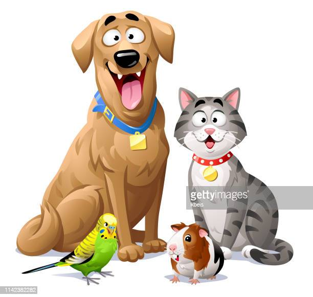 cat, dog, budgie and guinea pig - golden retriever stock illustrations, clip art, cartoons, & icons