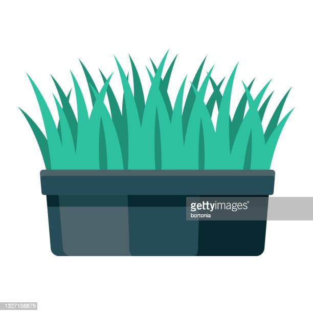 cat grass icon - catmint stock illustrations