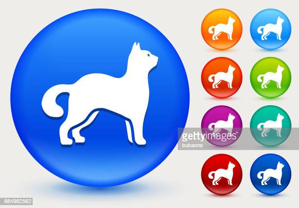 Cat Icon on Shiny Color Circle Buttons