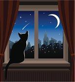 Cat Looking at Shooting Star