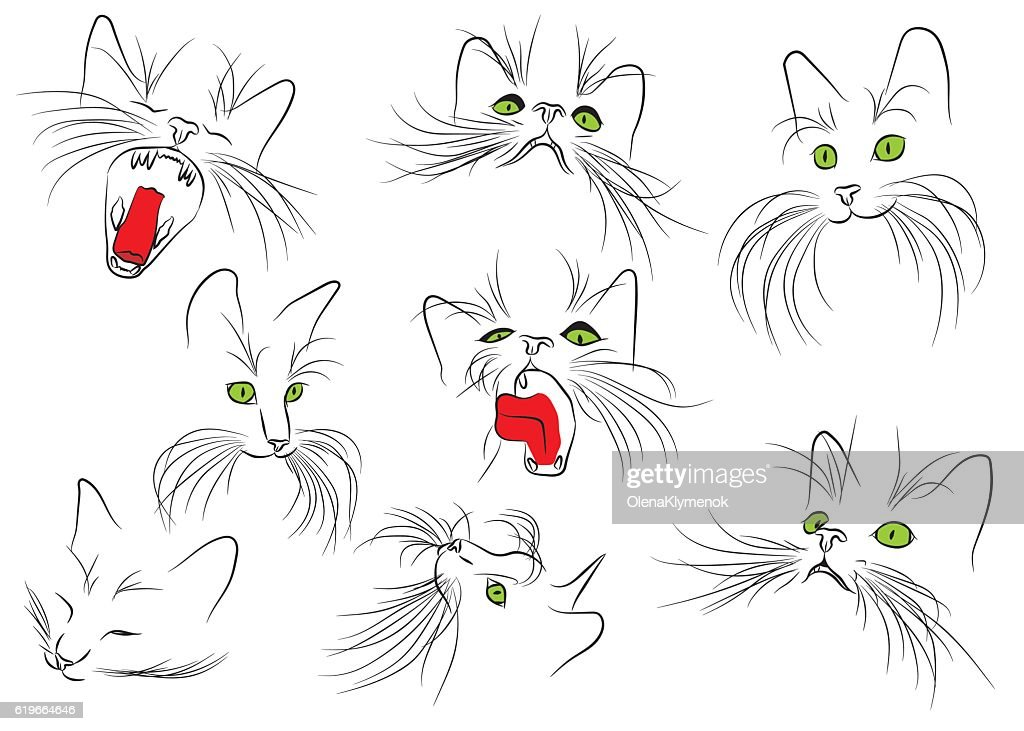 Cat muzzle with long whiskers isolated on the white background.