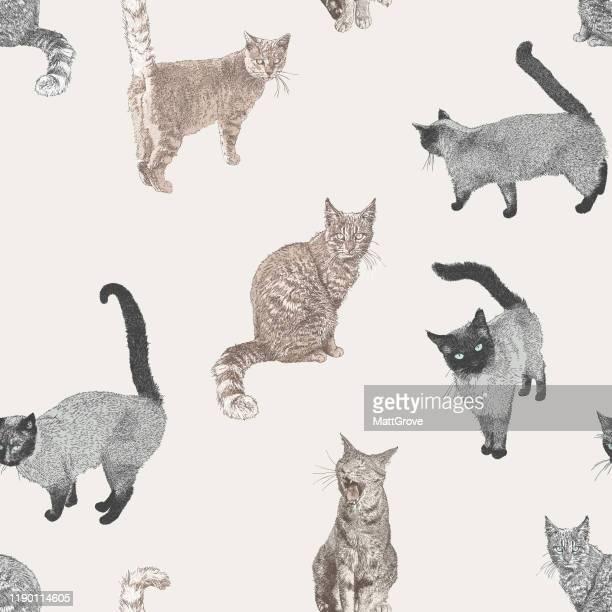 cat seamless repeat pattern - art product stock illustrations
