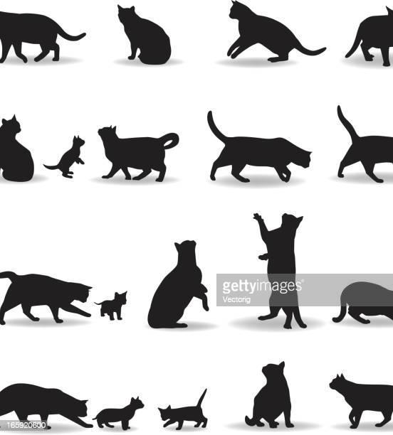 illustrations, cliparts, dessins animés et icônes de silhouette du chat - chat