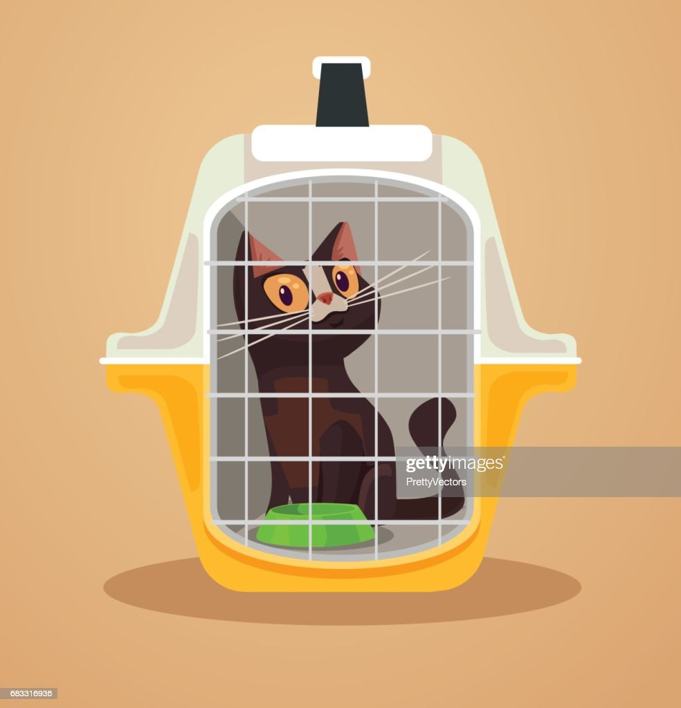Cat transport box. Carrying case