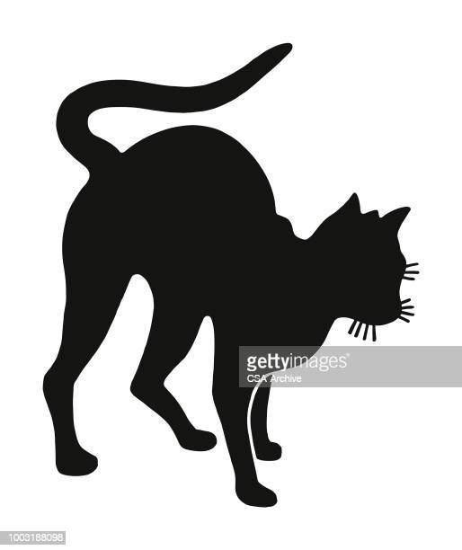 cat - bad luck stock illustrations, clip art, cartoons, & icons