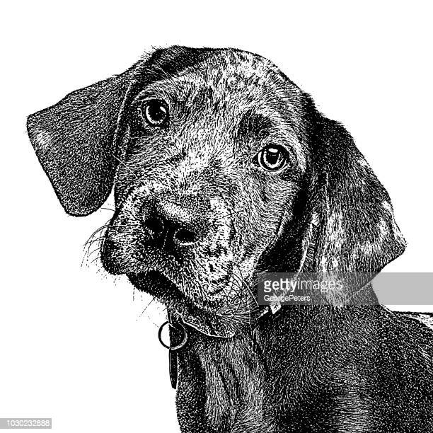 catahoula leopard dog puppy in animal shelter - pen and ink stock illustrations