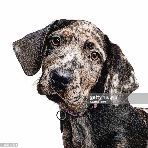 catahoula leopard dog puppy in animal shelter - catahoula leopard dog stock illustrations