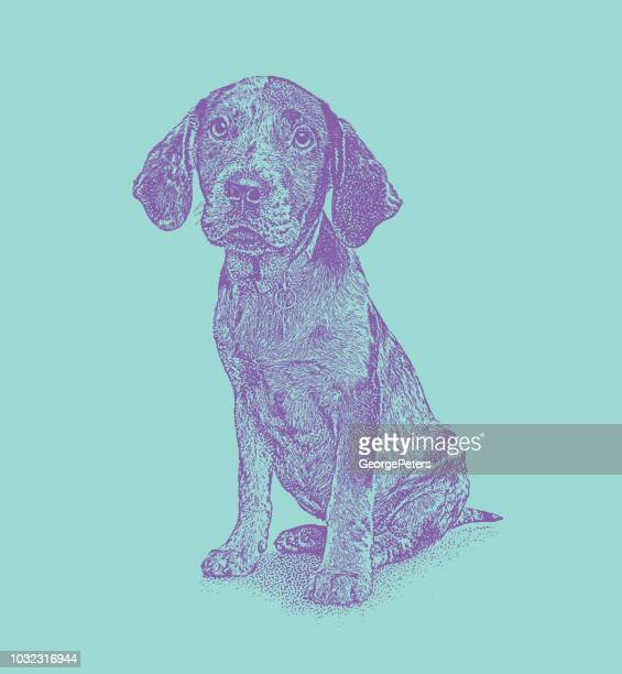 catahoula leopard dog puppy in animal shelter waiting to be adopted - catahoula leopard dog stock illustrations