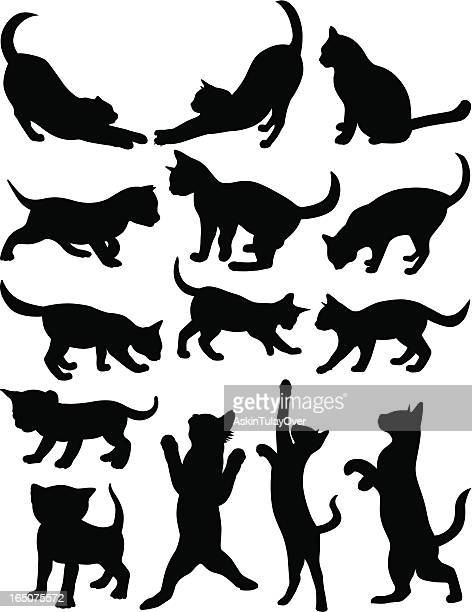 cats 1 - stretching stock illustrations, clip art, cartoons, & icons