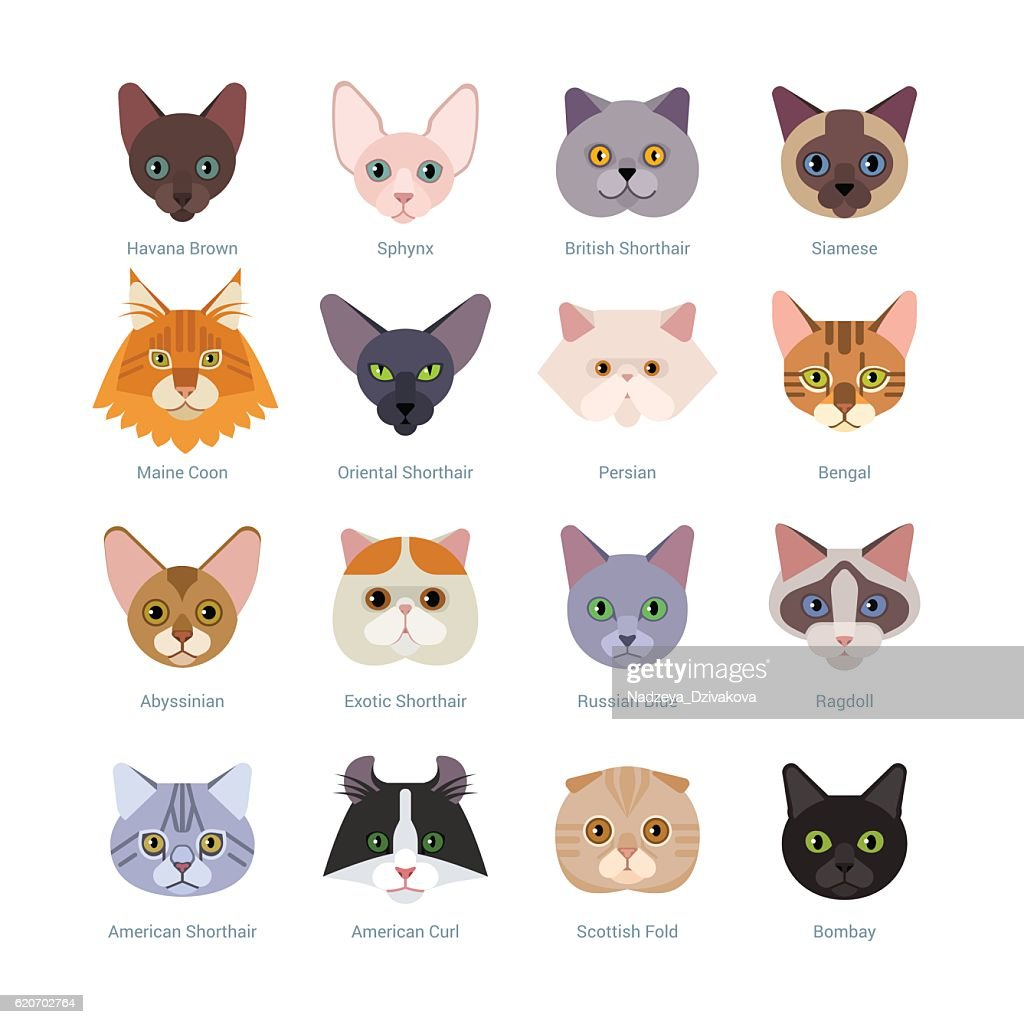 Cats faces collection