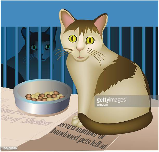 Cats in animal shelters
