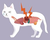 cat's organ and stomachache, vector illustration