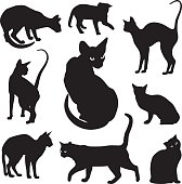 Cats silhouettes graphic vector set