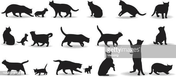 cats - undomesticated cat stock illustrations