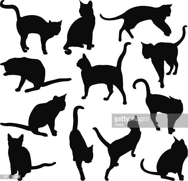 illustrations, cliparts, dessins animés et icônes de les chats - chat noir