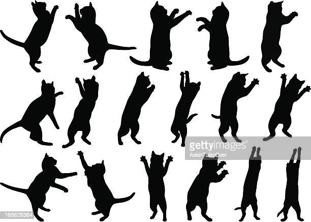 cats - stretching stock illustrations, clip art, cartoons, & icons