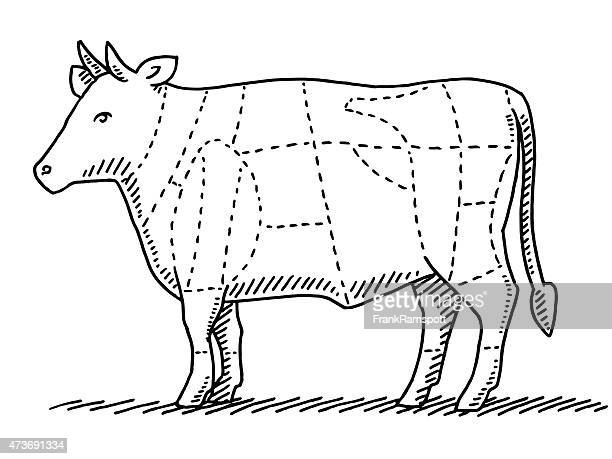 cattle beef meat parts chart drawing - sirloin steak stock illustrations, clip art, cartoons, & icons