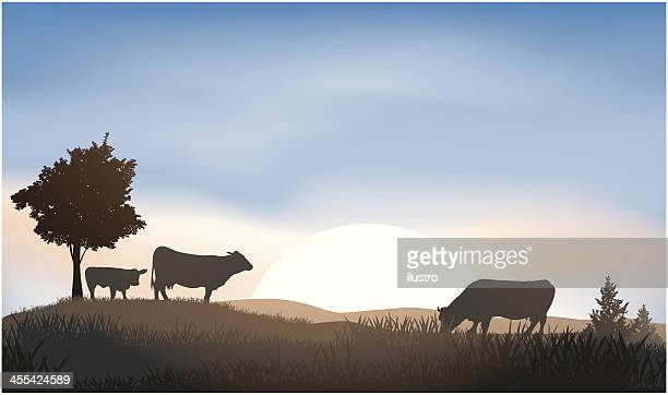 cattle - calf stock illustrations, clip art, cartoons, & icons