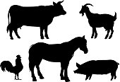 cattle vector
