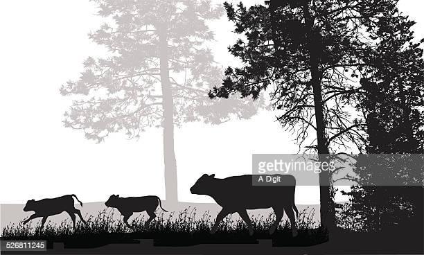 cattlerunning - calf stock illustrations, clip art, cartoons, & icons