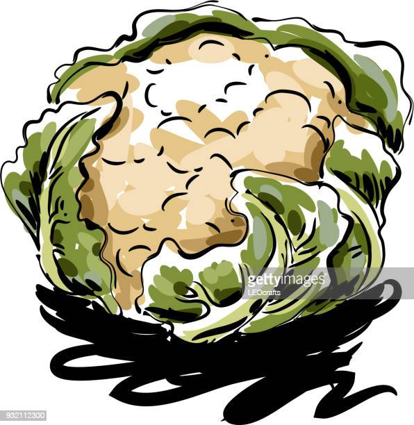 cauliflower drawing - cauliflower stock illustrations, clip art, cartoons, & icons