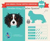 Cavalier King Charles Spaniel Dog breed vector infographics