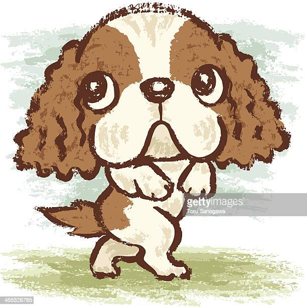 Cavalier King Charles Spaniel walking