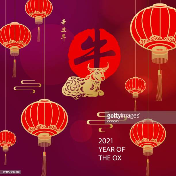celebrate chinese new year with ox - year of the ox stock illustrations