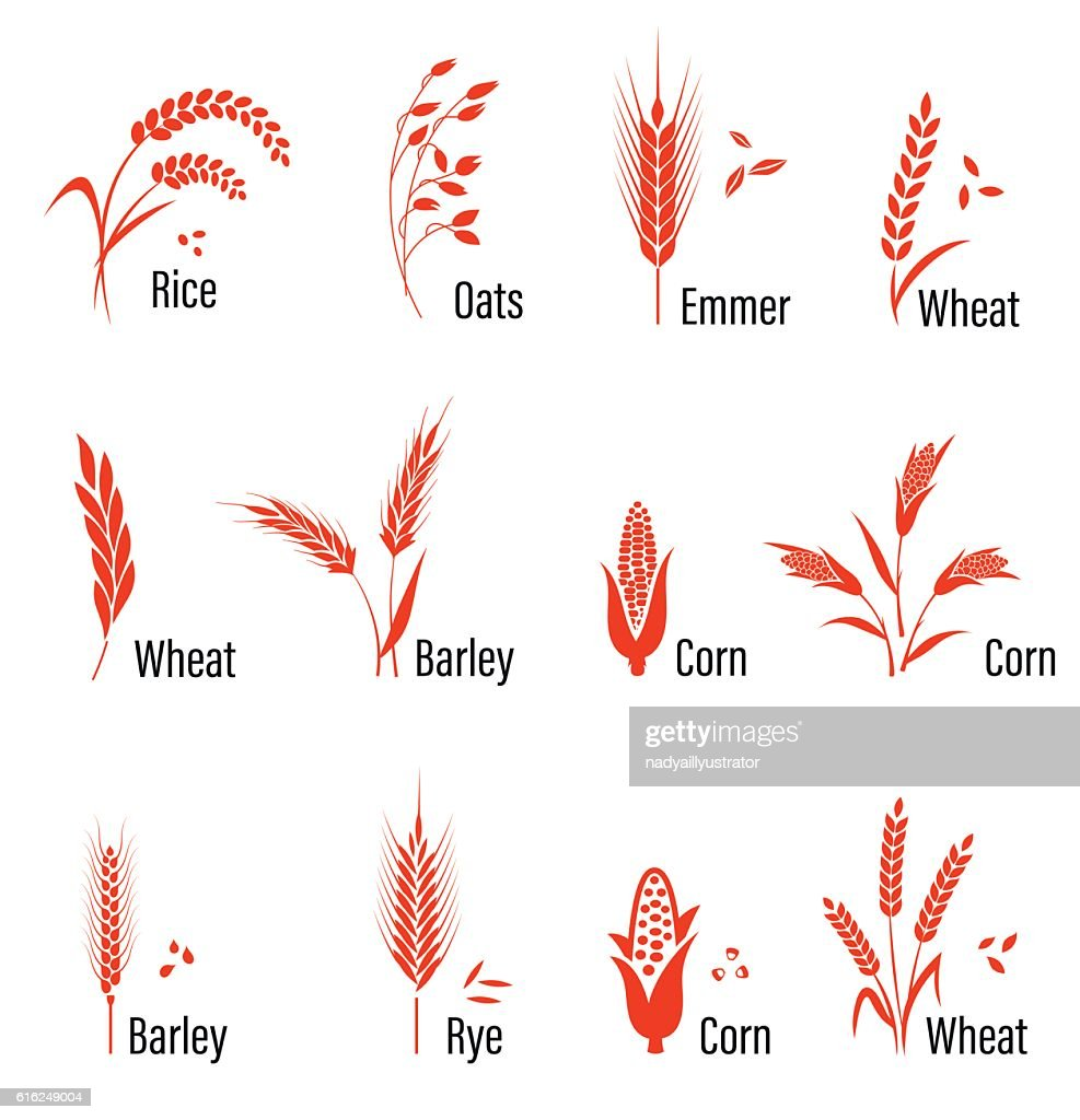 Cereals icon set with wheat. : Vector Art