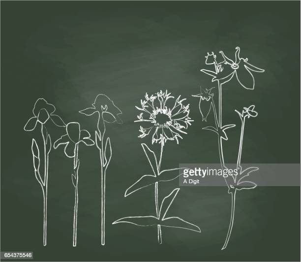 Chalkboard Hillside Wild Flowers Vector Illustration