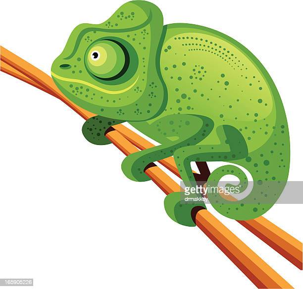 camaleon - chameleon stock illustrations, clip art, cartoons, & icons