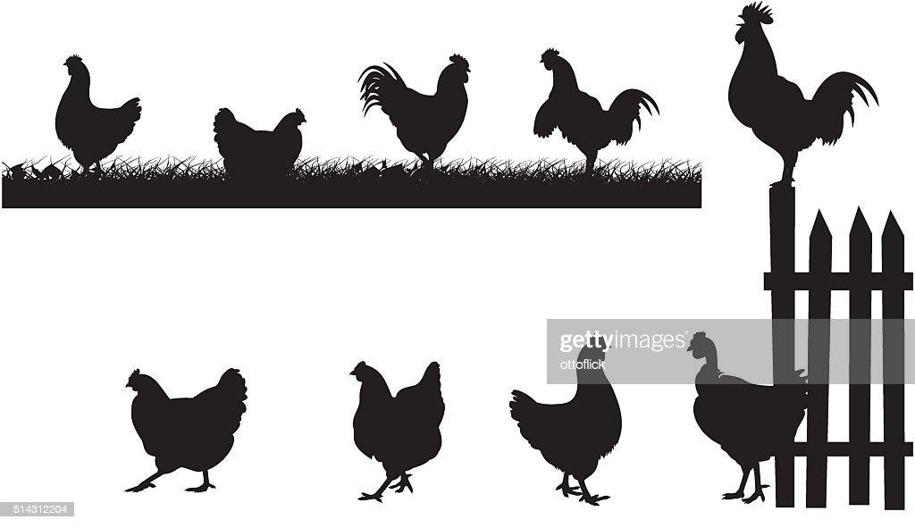 chciken, hen, rooster - vector silhouettes