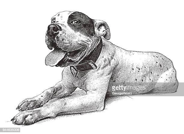 cheerful pit bull terrier - stipple effect stock illustrations