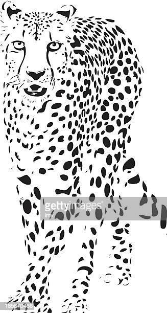 Gepard Vektor -