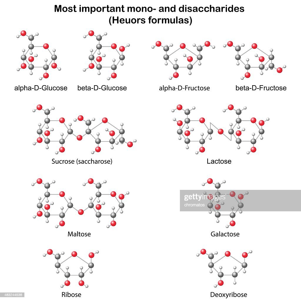 Chemical structural models of main mono- and disaccharides