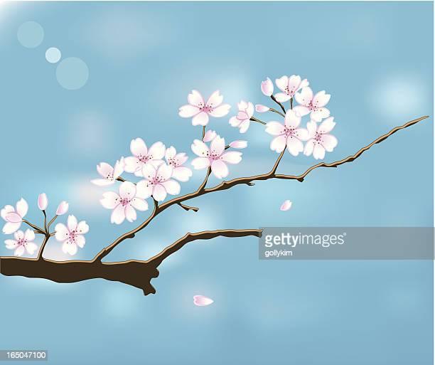 cherry blossom against blue sky - cherry blossom stock illustrations, clip art, cartoons, & icons