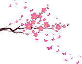 Cherry Blossom and butterfly chinese new year