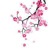 Cherry Blossom Background Sakura Flowers Pink On Branch