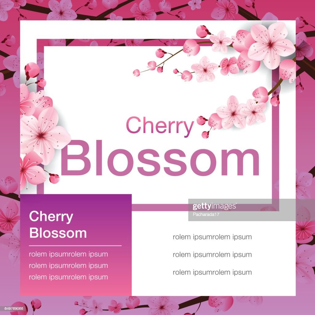 cherry blossom, banner design, sakura Japan, vector illustration.