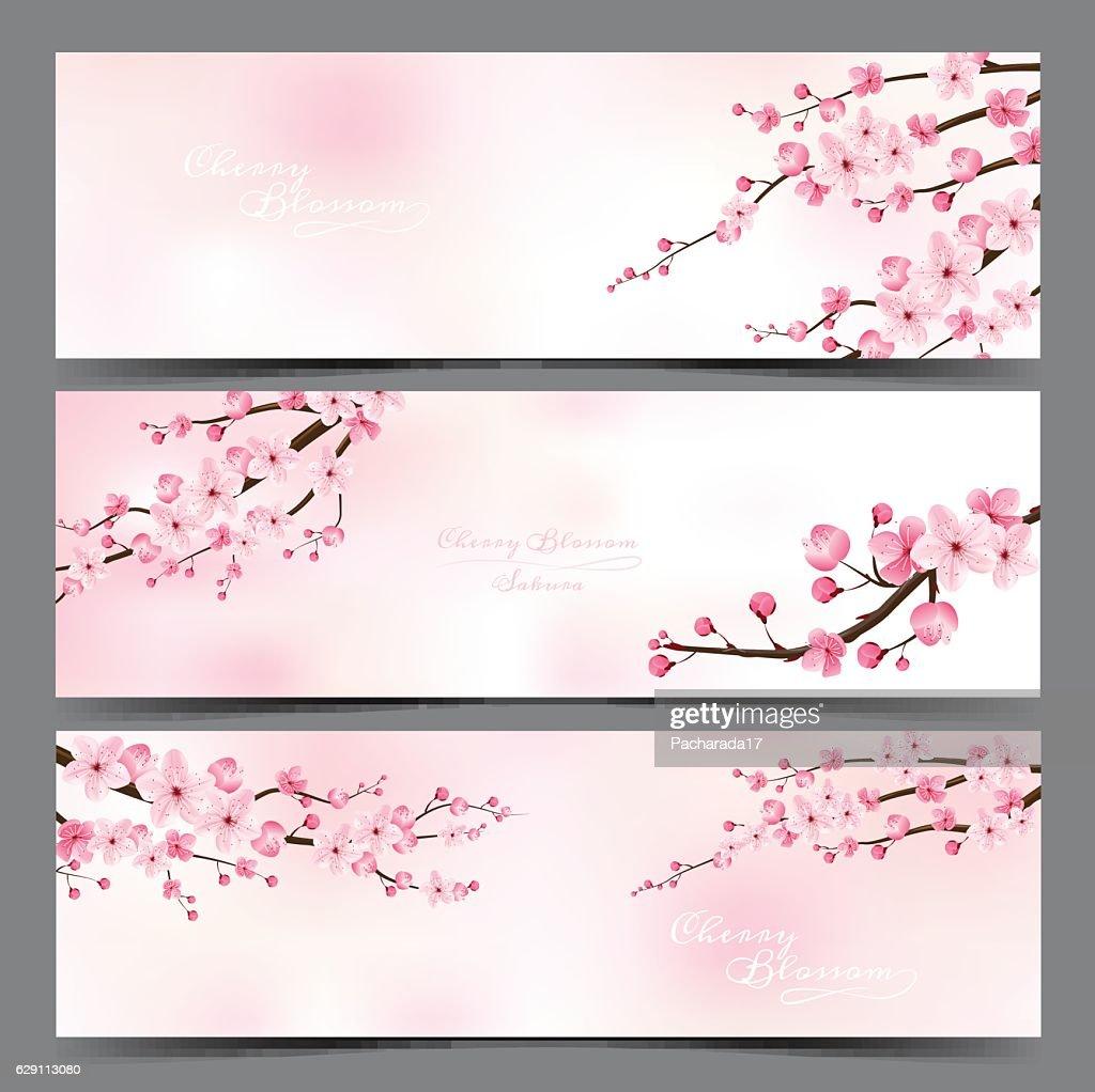 cherry blossom realistic vector, sakura.
