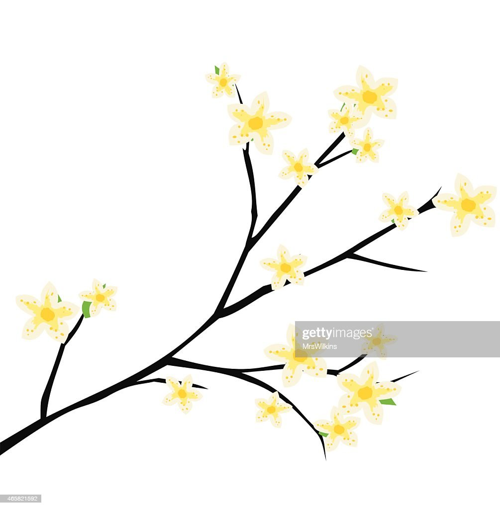 Cherry blossom, spring branch with flowers blooming vector illustration