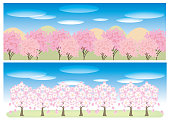 Cherry blossom trees Banner set