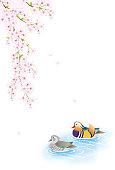 cherry blossoms and brace of mandarin ducks